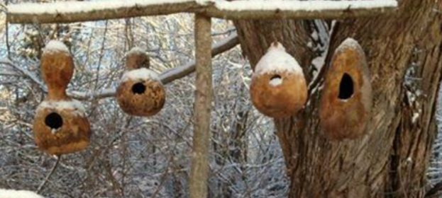 Winter Birdhouses For Our Feathered Friends