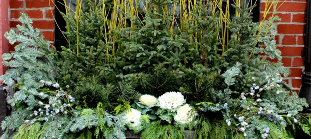 Beautiful Winter Garden Containers
