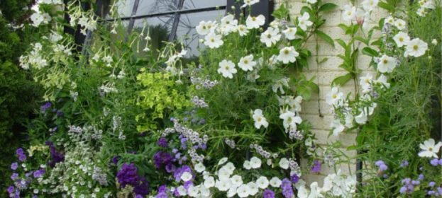 Charming Spring Window Boxes
