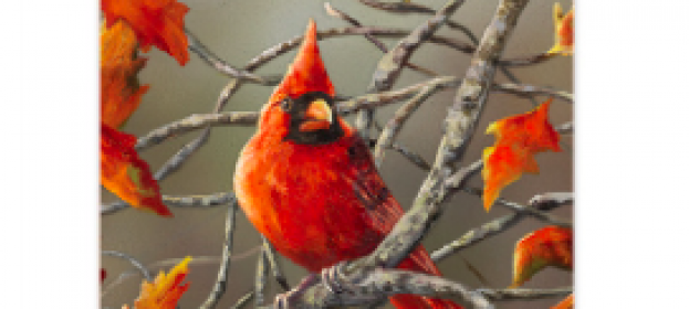 The Cardinal: A Beautiful Reminder of Loved Ones