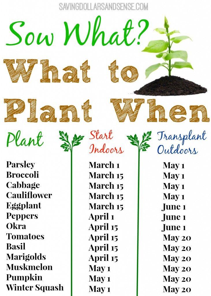 Winter Gardening Tips Flagsonastickblog Com