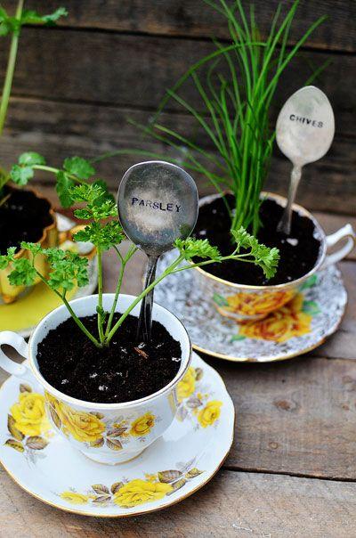 tea cup gardening