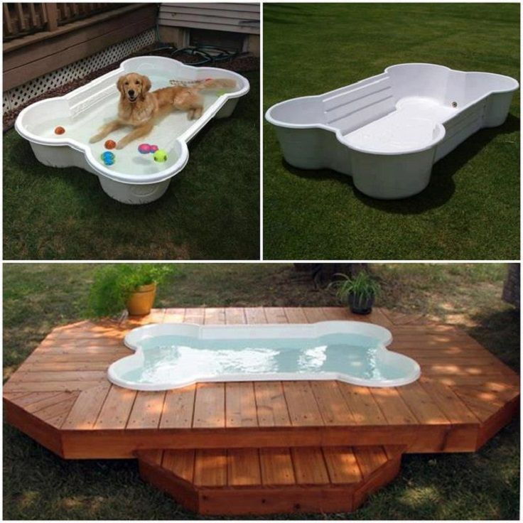 swimming pool for your pet