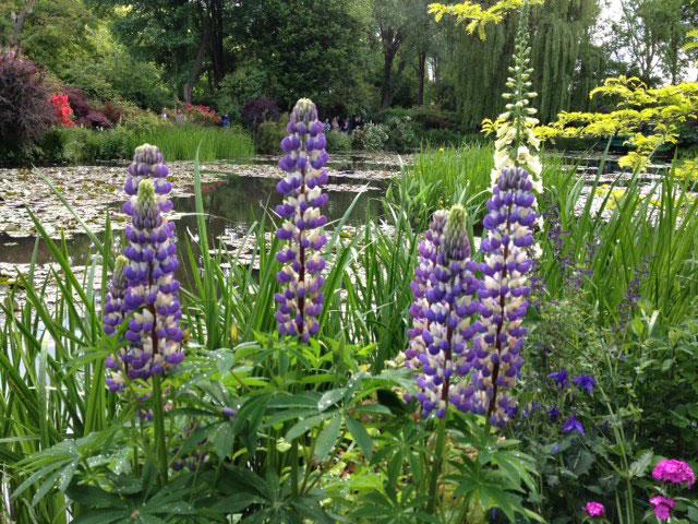 Monet's Garden - Spring 2015