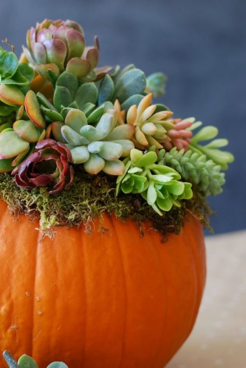 DIY Pumpkin succulent arrangement